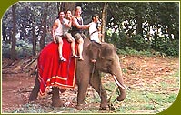 Elephant Safari, Indian Wildlife