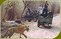Jeep Safari, Indian Wildlife